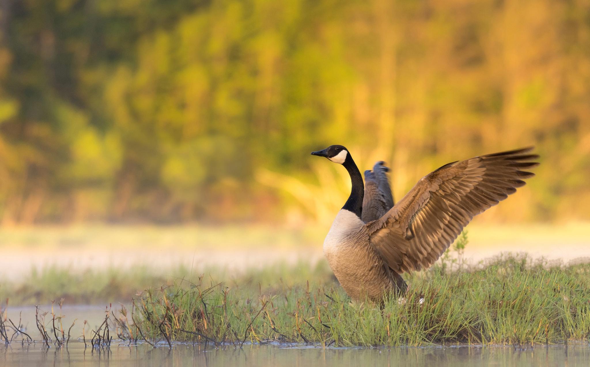 Tractage contre le foie gras terminé : 184 signatures récoltées