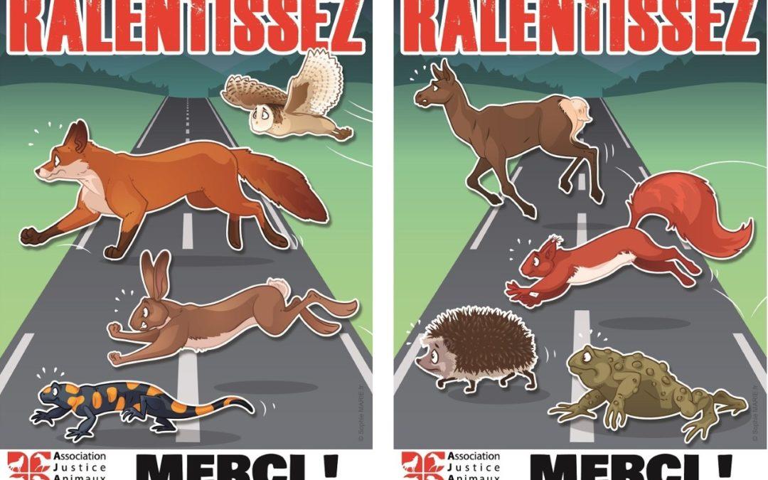 Campagne contre les collisions avec la faune sauvage