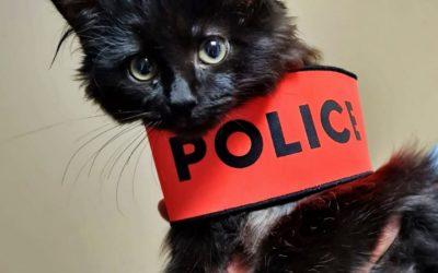 Réunion d'information et d'échange autour de la maltraitance animale avec Maître Olivia Symniacos